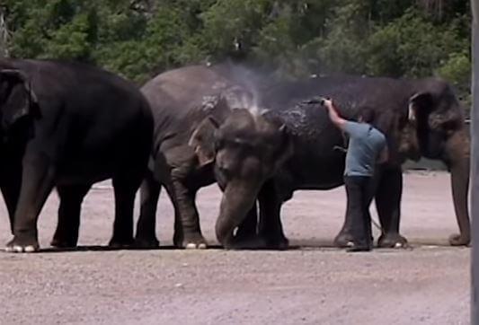 Elephant Handler Habib Omar and Libby