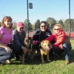 rescue dog reunite 2