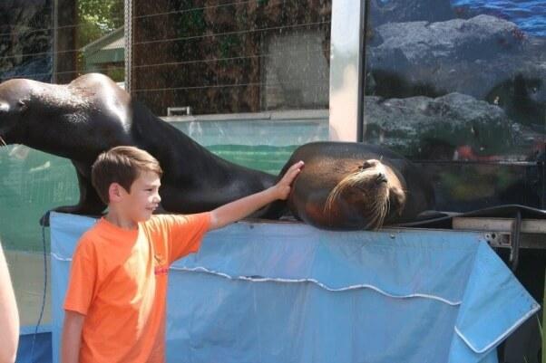 Boy with sea lion