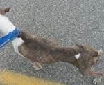 watertown dog abuse 1
