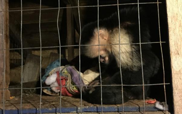 Monkey at Tri-State Zoo