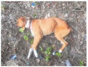 Alabama Dog Abuse
