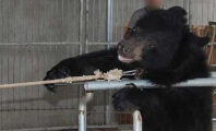 This Is What Life Is Like for a Bear in the Chinese Circus Industry