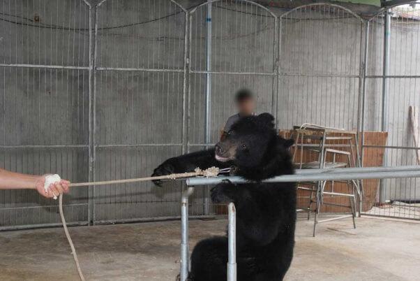 Bear-in-Chinese-Circus-Doudou