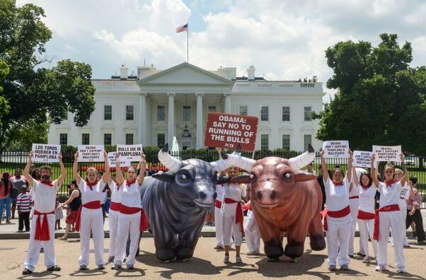 Bull demo white house