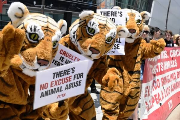 costumed PETA tigers protest animal circus acts