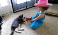 Video: Cat Healing From Infected Wound Finds Best Friend in Little Girl
