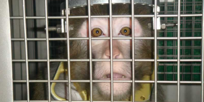 Why Every Teacher Should Be Anti-Vivisection—Starting With Dissection