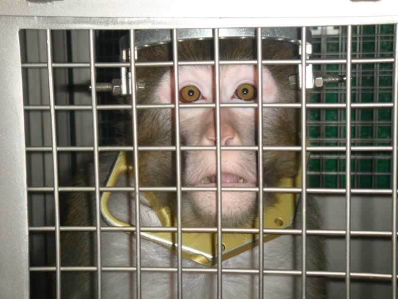 UPDATED: Monkey Badly Burned in Botched Experiment | PETA