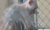 Victory: Monkey Supplier Must Release Records
