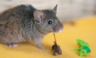 Your Daily Cute: Rescued Mice Do Adorable Rescued-Mice Things (Photos)