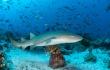 Nurse Shark baby shark shark fish ocean