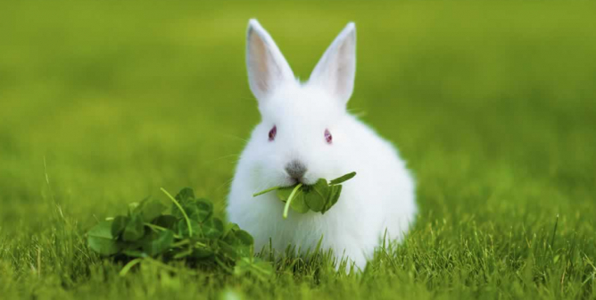 HUGE News! Cosmetics Regulations in China Just Got More Animal-Friendly