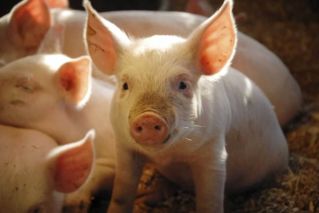 VICTORY: Johnson & Johnson Stops Using Animals for Sales Training After PETA Campaign!
