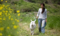 Like Dogs, Goats Bond With Us—but the Military Has Declared War on Them