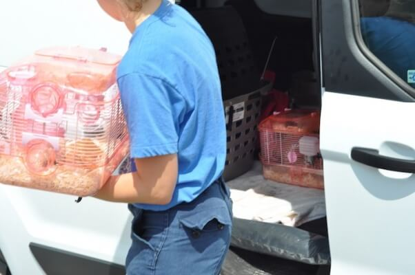 Rescued mice being moved into building