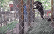 Roadside Zoo Cited After Charging Bear Caught on Video