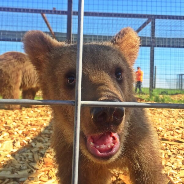 Rescued! 13 Bears Get a New Lease on Life | PETA