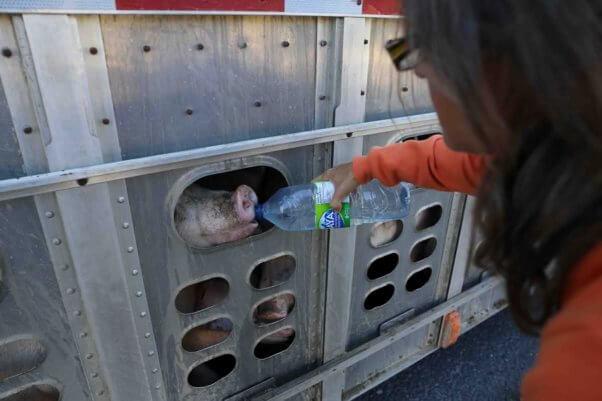 Elli Garlin photo close up of Anita giving water