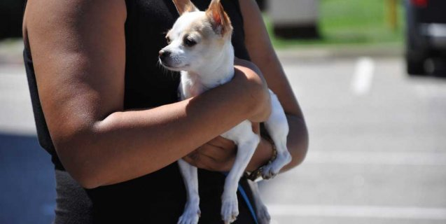 Want to Adopt an Animal Rescued From Louisiana Floods? Here's Your Chance!