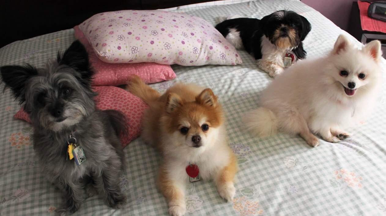 Donate Use Dog Beds