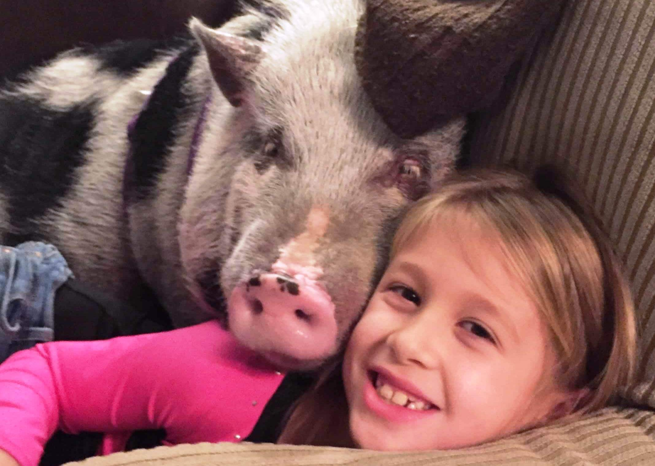 VIDEO: Abused Pig Cuddling With New Family Will Melt Your