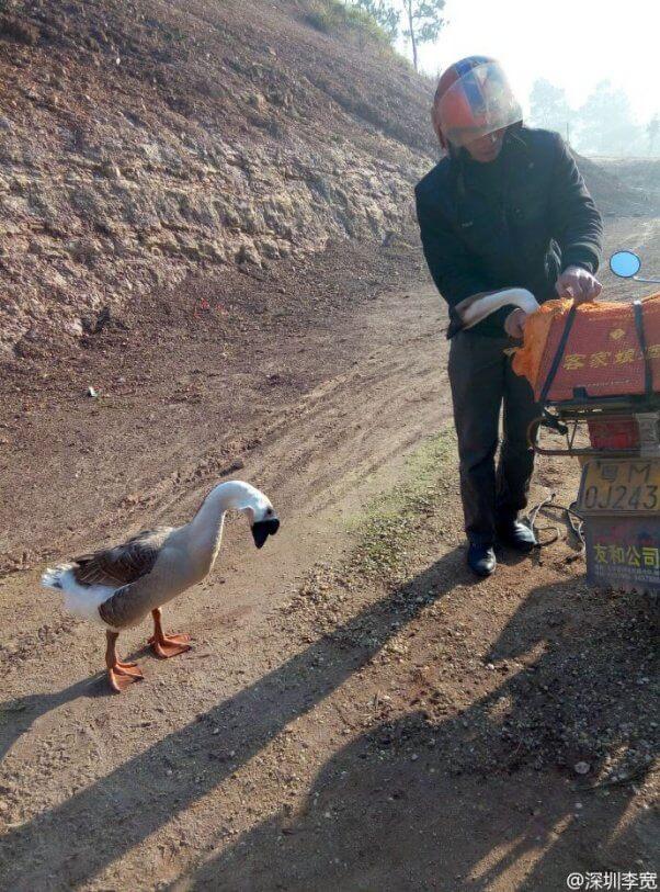 Sad Goose Says Goodbye