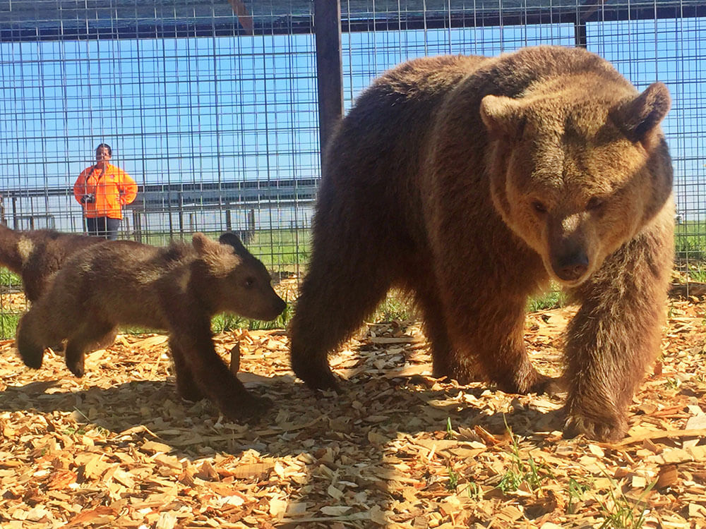2017- PETA Has Now Saved 60 Bears From Tiny Pens and Concrete Hells