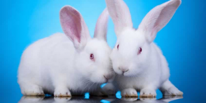 PETA Adds Aussie Hair Care to Beauty Without Bunnies Cruelty-Free List