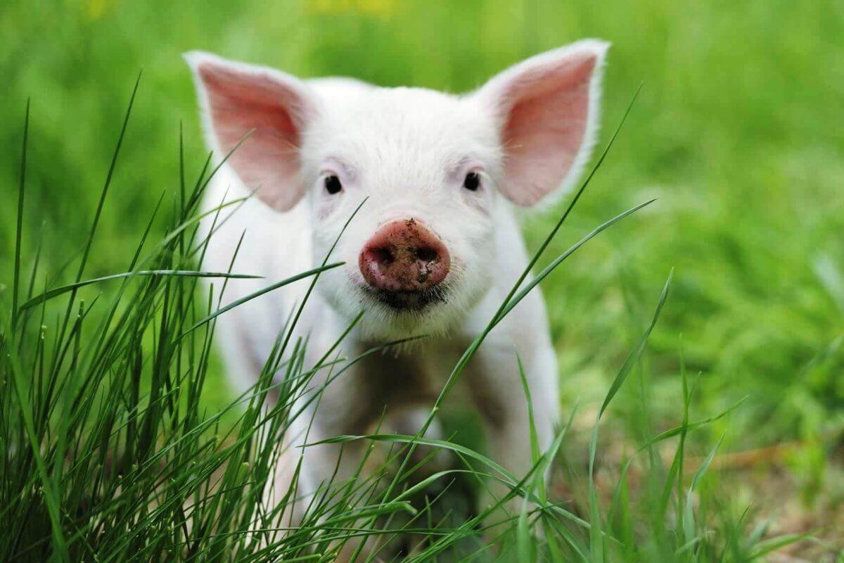 2017: Pharma Giant Sanofi Pledges to Stop Killing Animals for Sales Training