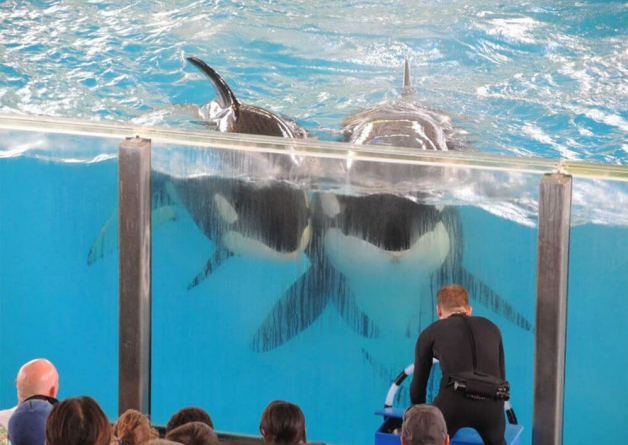 Is SeaWorld Bad? Check Out These Shocking Marine Park Facts