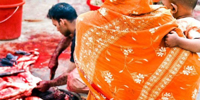 Animal Sacrifice: Not Needed at Any Time