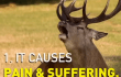 4 Simple Reasons to Never Support Hunting
