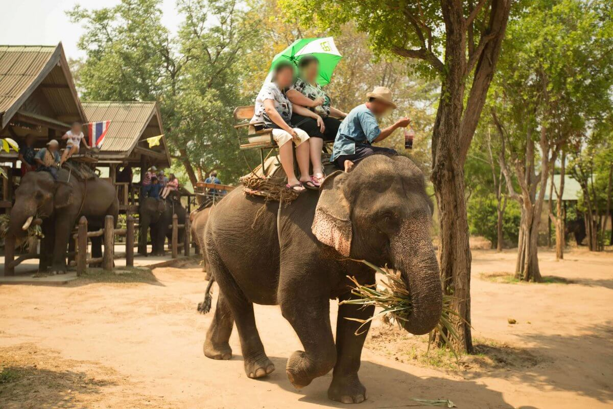 elephants and other wild animals who don't want to be touched