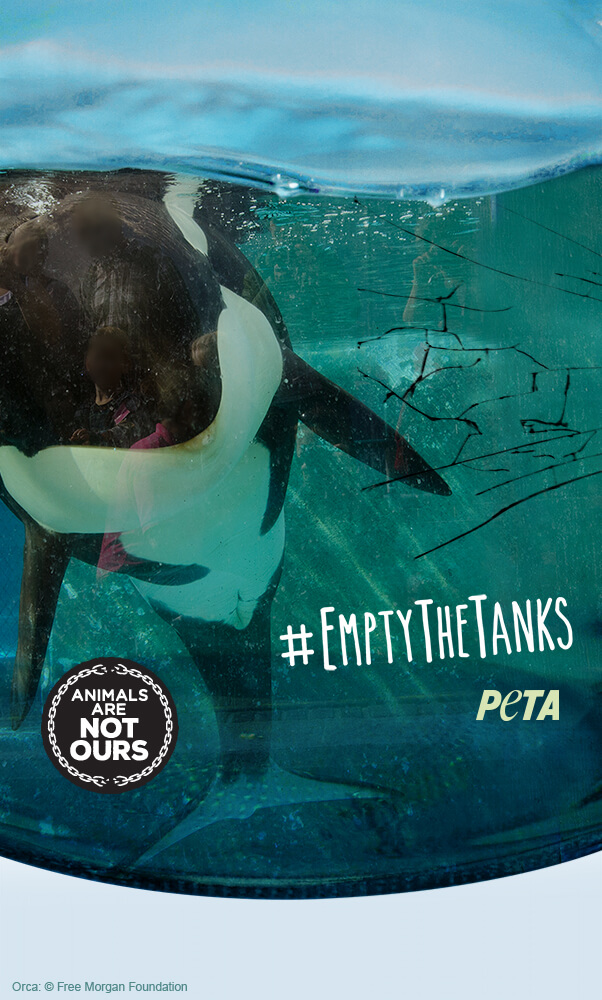 Get Your Free Animal Rights Iphone Wallpaper Peta