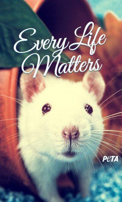 peta-iphone-every-life-matters