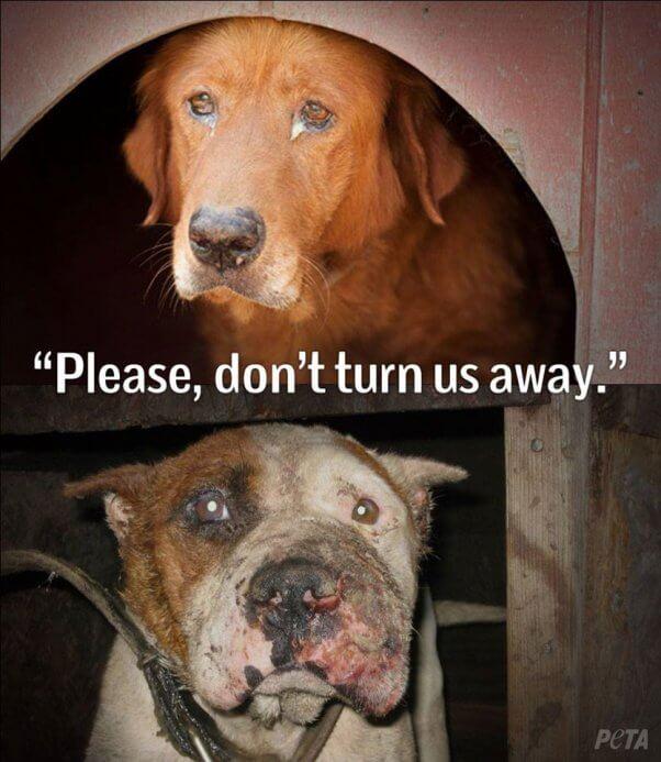 sad-dog-facebook