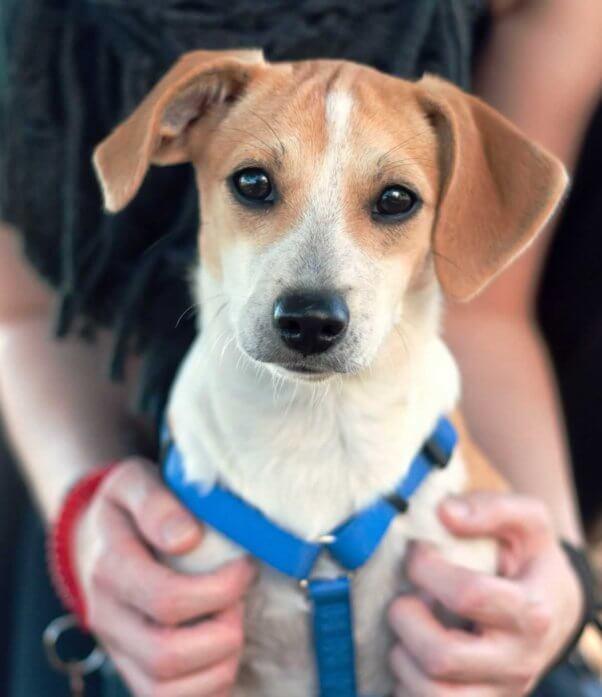 Rescued puppy Emmy