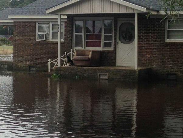 matthew-floods-dog-on-porch