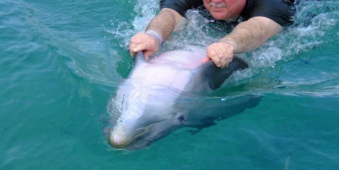 'Dolphin Therapy' Is High-Priced Exploitation of Animals and Humans