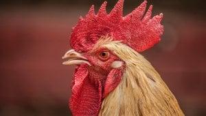 Help Stop Animal Suffering Now