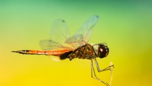 PETA Rapid-Action: Quick, Easy Ways to Help Insects Now