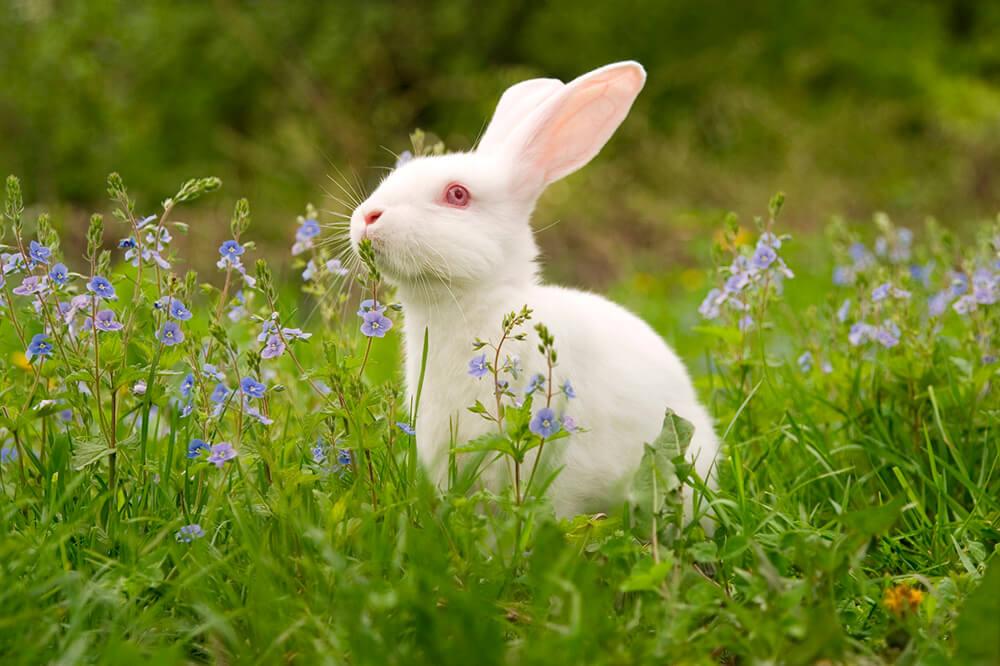 2018 Dove Bans Animal Tests