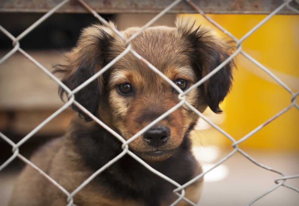 Cute brown puppy looking out through fence
