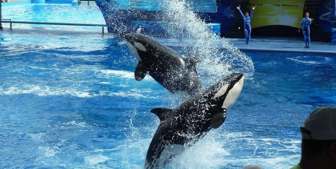 PETA Breaks Down All the Problems With SeaWorld