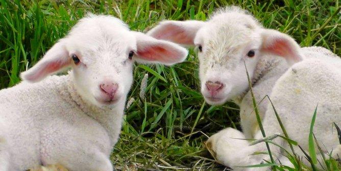 Action Alerts | PETA