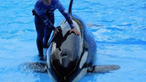 Tell Travel Company TUI to Stop Supporting Abuse of Orcas, Other Dolphins