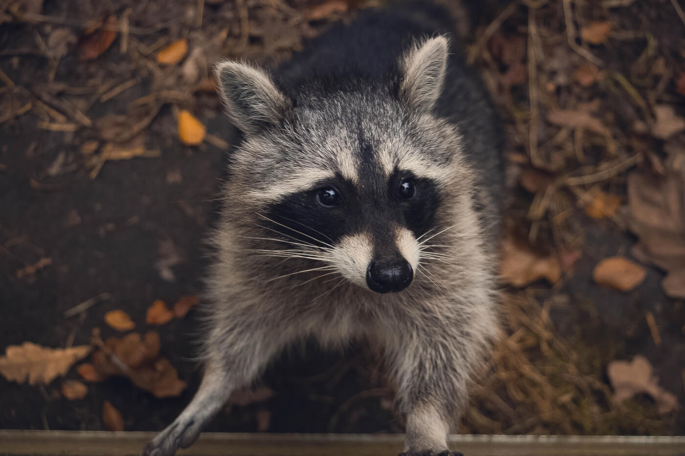 Here's How to Help Wild Animals in Need