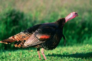 Have a Heart—Not a Drumstick—With These Vegan Turkey Products