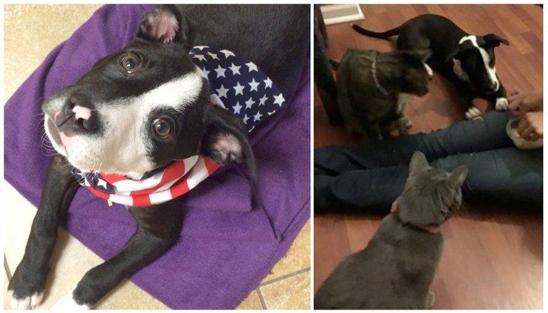 andie ariel rescue puppy patriotic